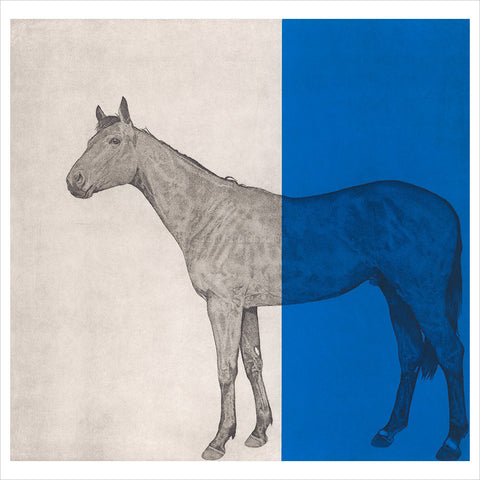 Horse Study - Blue by Guy Allen
