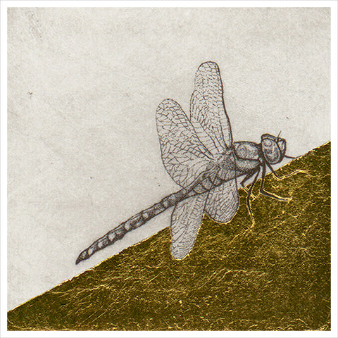 Dragon Fly Study by Guy Allen