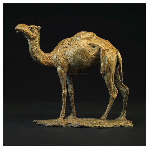 Camel Standing by Hamish Mackie