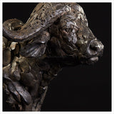 Cape Buffalo Head Study by Hamish Mackie
