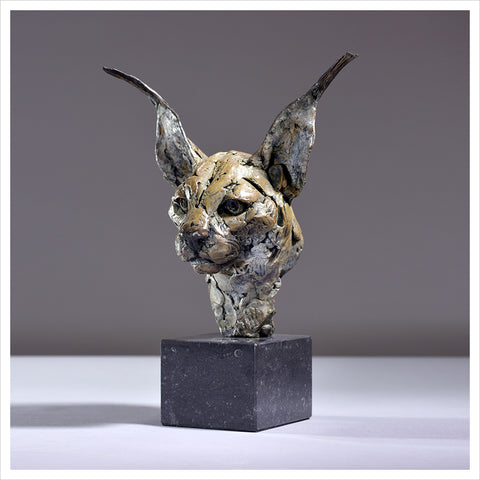 Caracal Head 2018 by Hamish Mackie