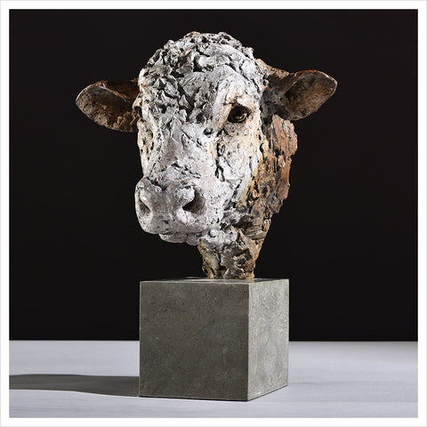 Hereford Bull Head by Hamish Mackie