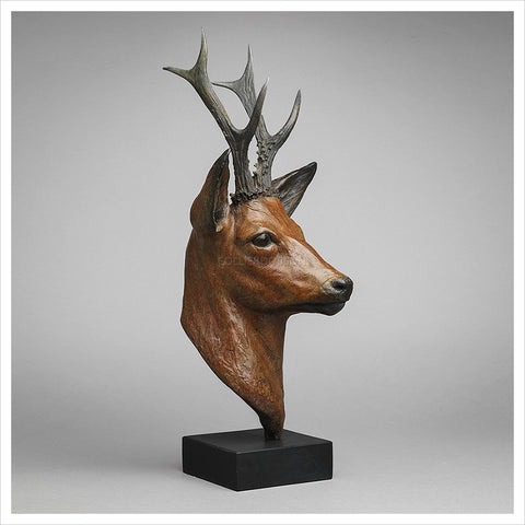 Roe Buck by Jenna Gearing