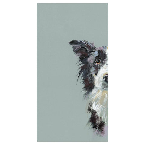 Curious Collie by Nicky Litchfield