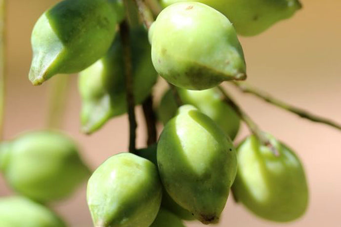 Kakadu Plum – the beauty shelf must have and why?