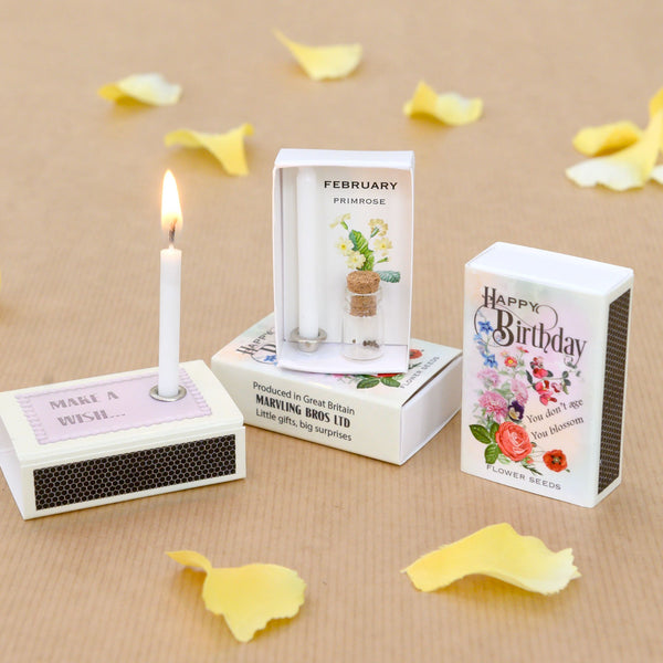 February Birth Flower Seeds And Birthday Candle Gift
