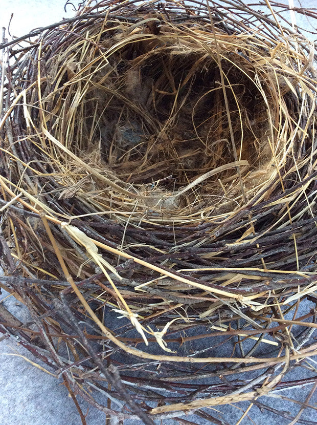 I am endlessly fascinated by nests