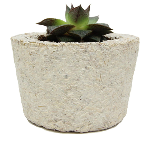 MycoComposite 029 Round Planters (6-pack)
