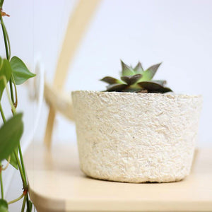 Ecovative Myco Foam planter grown on table
