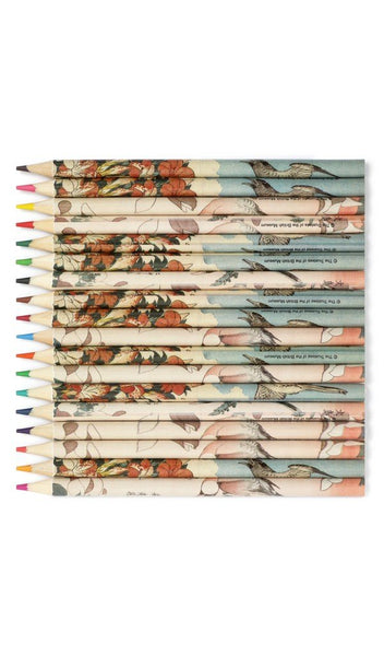 "British Museum Hokusai ""Magnolia & Java Sparrow"" Pencil Pot Set"