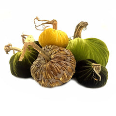 Plush Pumpkin Green Goddess Large Assortment