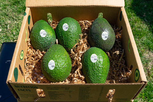 Jumbo 5 Count Avocados