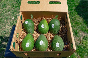 Large 6 Count Avocados