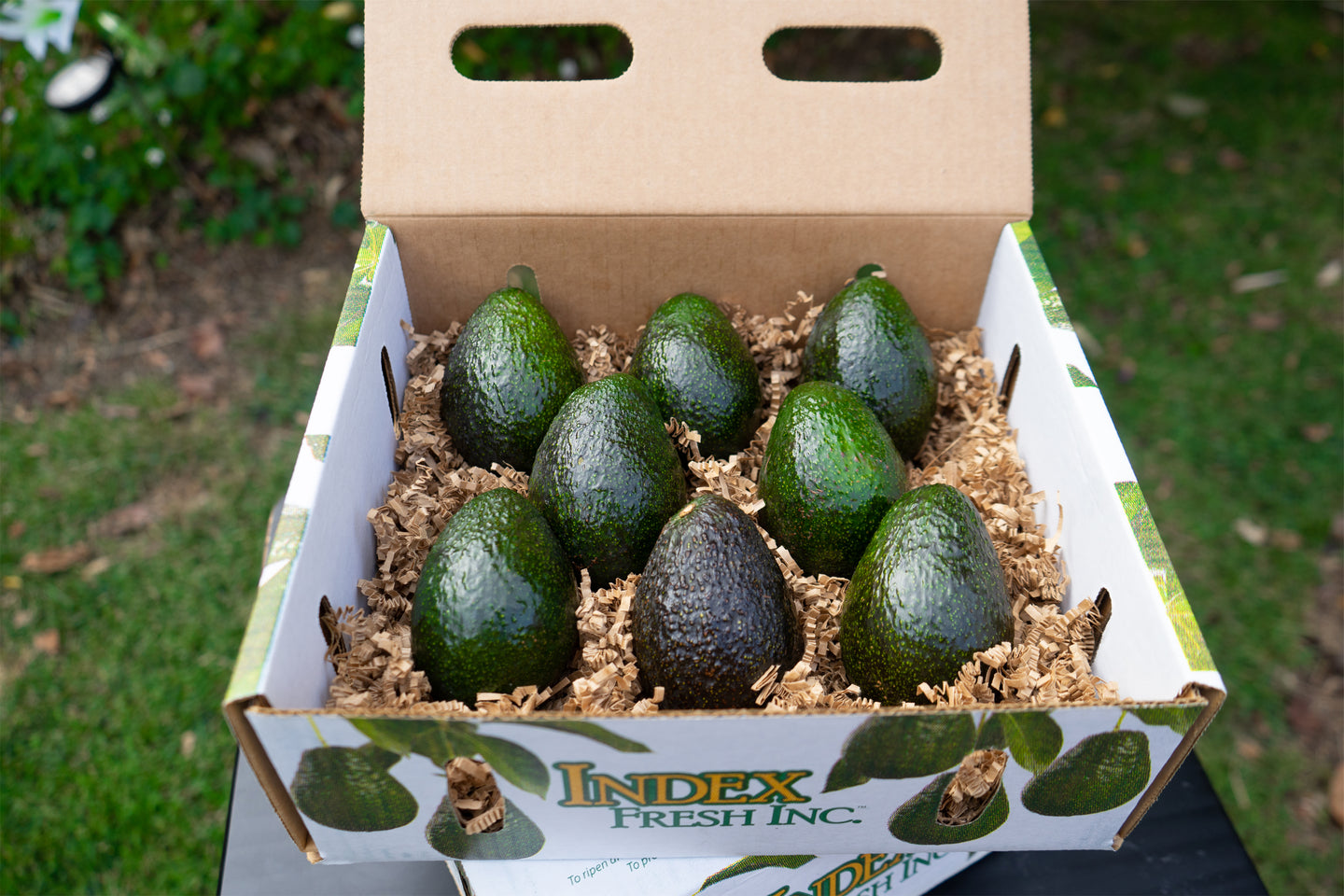 Small 8 Count Avocados