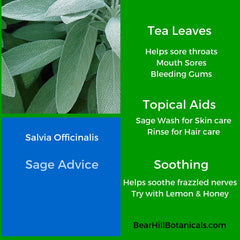 Bear_Hill_Botanicals_Sage_Recipes