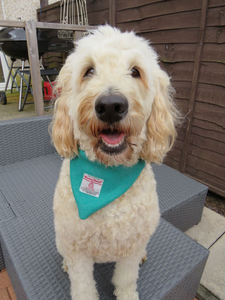 Large Jade Harris Tweed Bandana for Dogs
