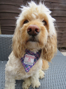Medium Purple, Pink and Green Harris Tweed Bandana for Dogs