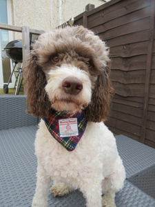 Tartan Medium Harris Tweed Bandana for Dogs