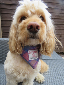 Medium Pink and Lilac Tartan Harris Tweed Bandana for Dogs