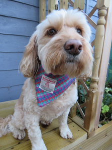 Multi Coloured Checked Medium Harris Tweed Dog Bandana