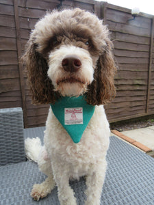 Jade Medium Harris Tweed Bandana for Dogs
