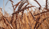 Spelt and Ancient Grains
