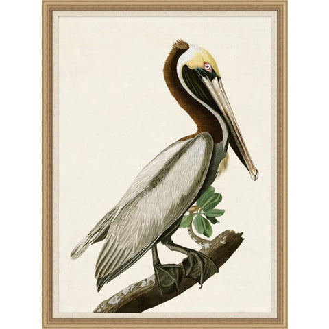 Audobon Brown Pelican - Wendover Art Group