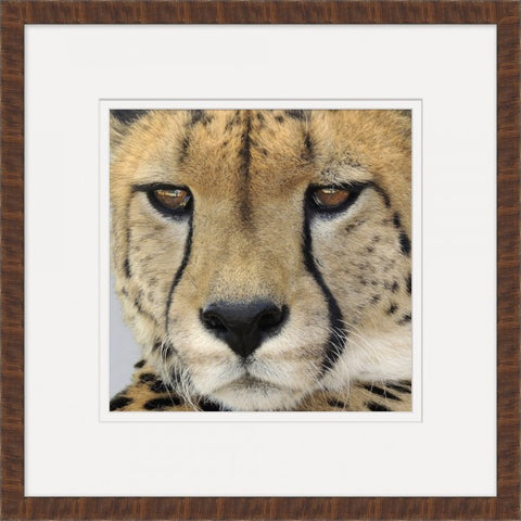 Cheetah - Wendover Art Group
