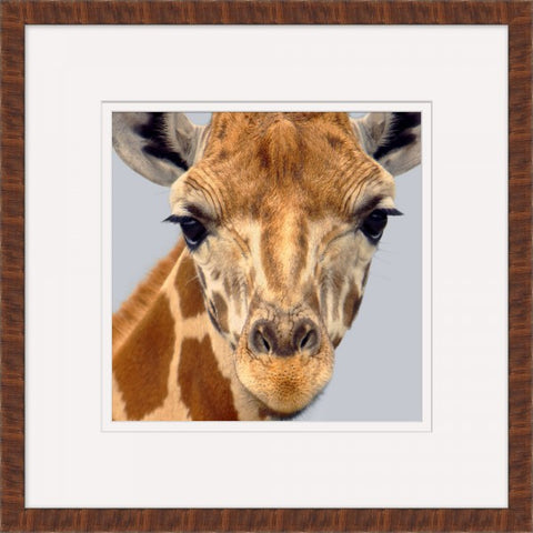 Giraffe - Wendover Art Group