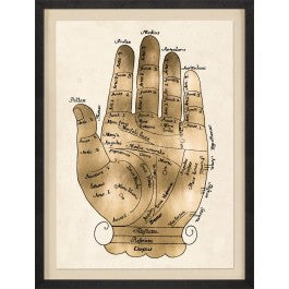 Gallicus Hand 1 - Natural Curiosities