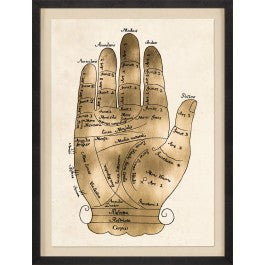 Gallicus Hand 2 - Natural Curiosities