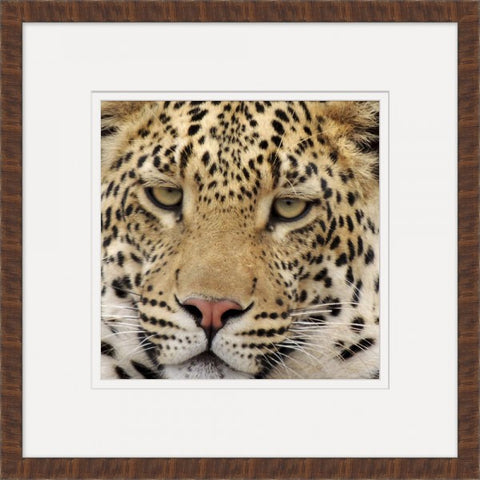 Leopard - Wendover Art Group