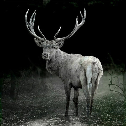 Majestic Stag 1 - Wendover Art Group