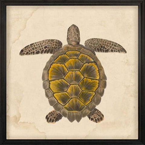 Nile Voyage Turtle 1 - Natural Curiosities