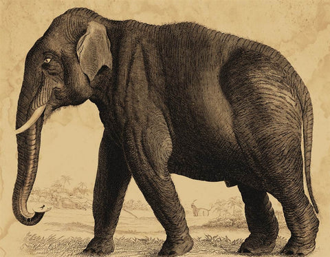 Faulkner Elephant - Natural Curiosities