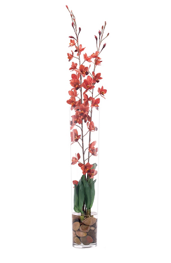 Orchid Cattleya - Natural Decorations Inc