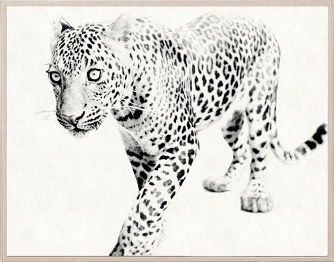 Tylinek Leopard - Natural Curiosities