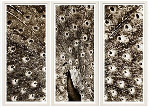 Peacock Triptych - Trowbridge Gallery