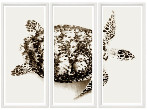 Turtle Triptych - Trowbridge