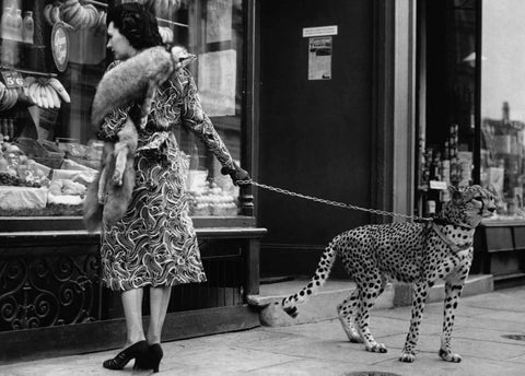 The Cheetah Who Shops - Trowbridge Gallery