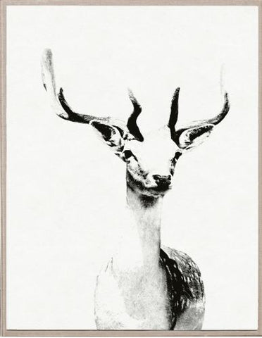 Tylinek Deer - Natural Curiosities