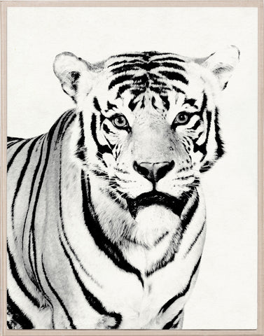 Tylinek Tiger - Natural Curiosities