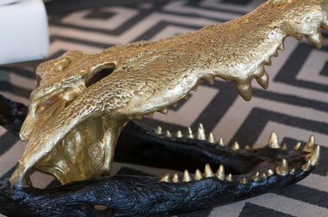 Crocodile Skull - Phillips Collection