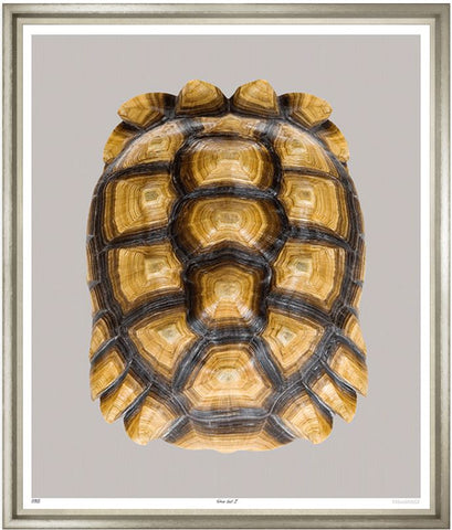 Tortoise Shell - Trowbridge Gallery