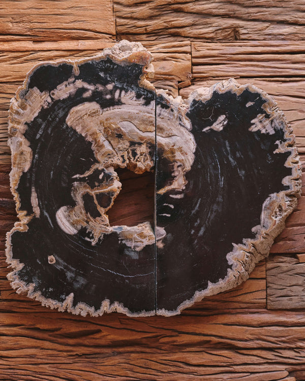 Story of Source Petrified Wood Platter Set