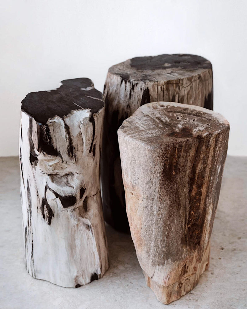 Story of Source Petrified Stools