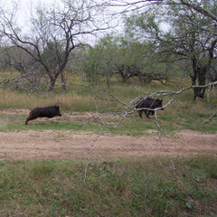 Deluxe Package: 4 Day 5 Night Hog Hunt Executive Package Amenities Included