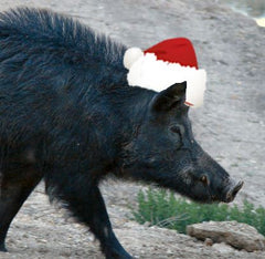 (w-2) Christmas Special $299 3 Day Hog Hunt Free Meals & Lodging