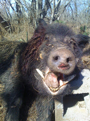 X-3 Day Hog Hunt: Up to 90% Off! Free Meals/Lodging! Choose Your Discount!