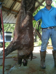 1 Day $275 - Hog Hunt with Gun Rental ~ unlimited hogs/sizes!